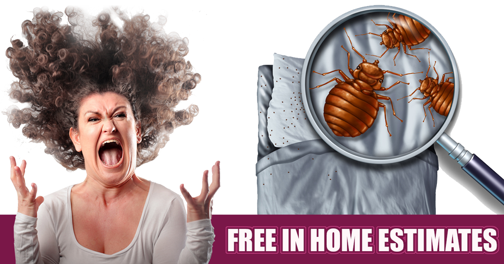 Free in home estimates large image showing close up of cartoon bed bugs.