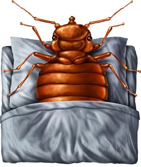 arrow exterminators : bed bug control