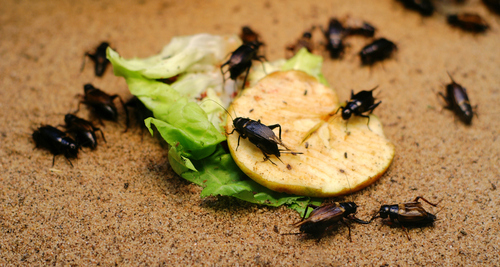 Don't Let Pests Spoil Your Holidays!
