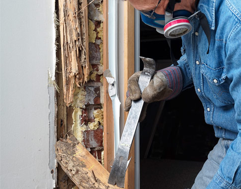 Man inspecting terminte damage on house.