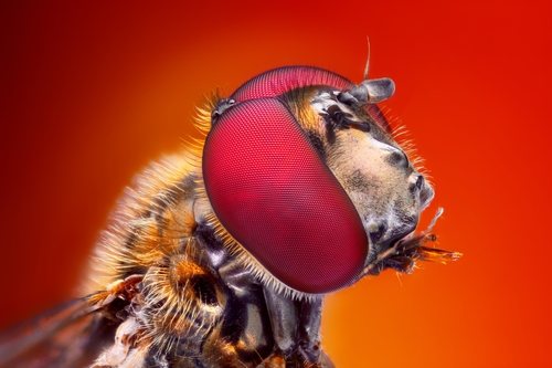 Fly Control and Prevention