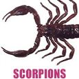 scopion pest control
